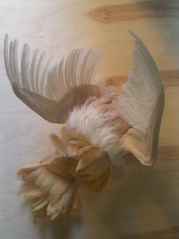 pássaro, 2013